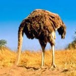 ostrich-150x150-5173435