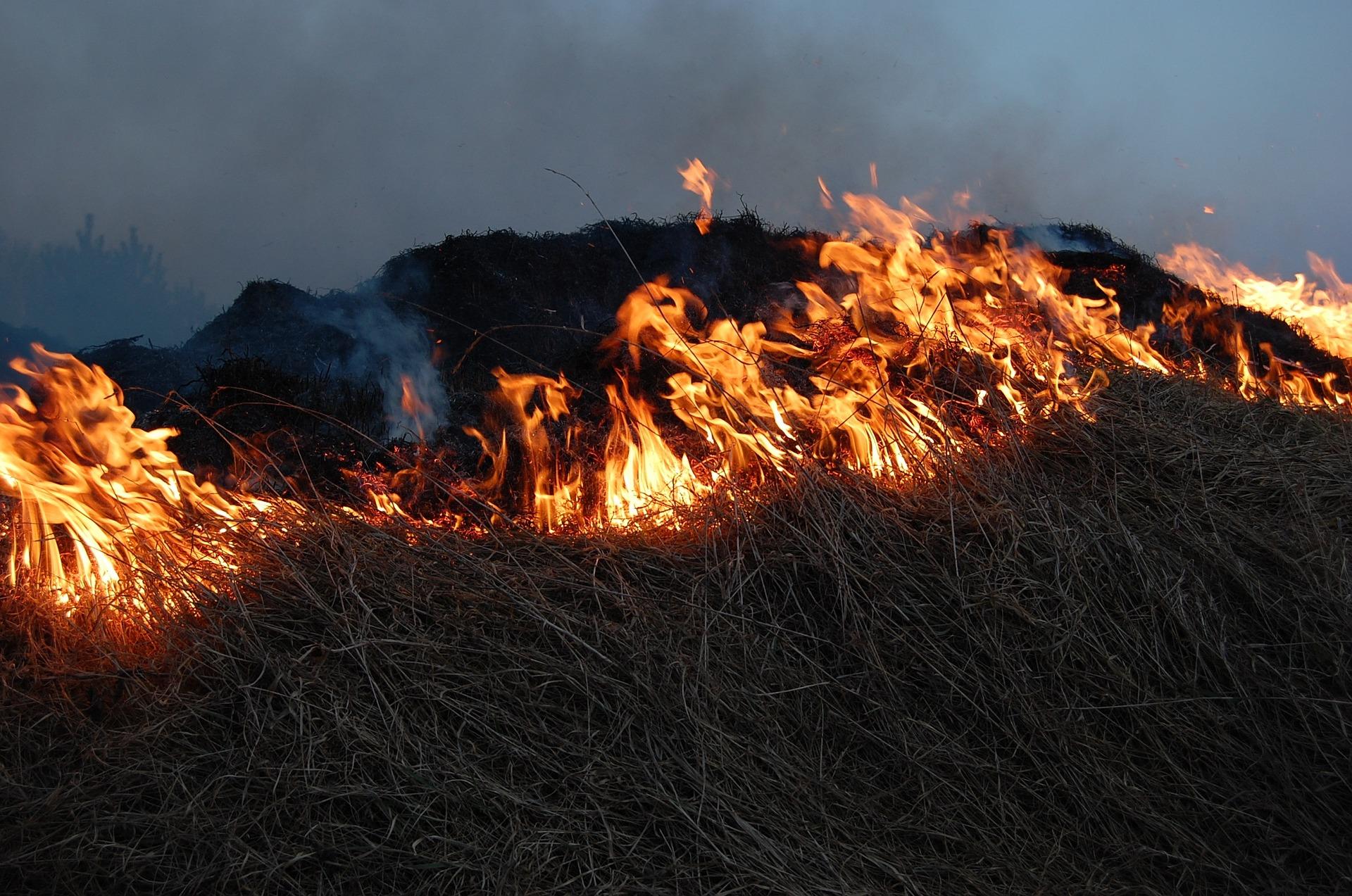 like-fire-through-dry-grass